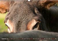 Bulgarische Großesel - Schwarze Schönheiten (Wandkalender 2019 DIN A3 quer) - Produktdetailbild 9