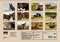 Bulgarische Großesel - Schwarze Schönheiten (Wandkalender 2019 DIN A3 quer) - Produktdetailbild 13