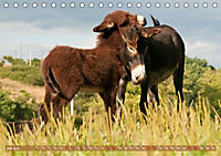 Bulgarische Großesel - Schwarze Schönheiten (Tischkalender 2019 DIN A5 quer) - Produktdetailbild 7