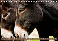 Bulgarische Großesel - Schwarze Schönheiten (Tischkalender 2019 DIN A5 quer) - Produktdetailbild 2