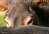 Bulgarische Großesel - Schwarze Schönheiten (Tischkalender 2019 DIN A5 quer) - Produktdetailbild 9