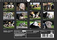 Bulldogs - Old English Bulldog Puppies (Wall Calendar 2019 DIN A4 Landscape) - Produktdetailbild 13