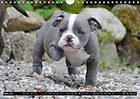Bulldogs - Old English Bulldog Puppies (Wall Calendar 2019 DIN A4 Landscape) - Produktdetailbild 5