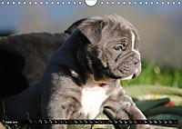 Bulldogs - Old English Bulldog Puppies (Wall Calendar 2019 DIN A4 Landscape) - Produktdetailbild 6