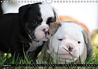 Bulldogs - Old English Bulldog Puppies (Wall Calendar 2019 DIN A4 Landscape) - Produktdetailbild 8