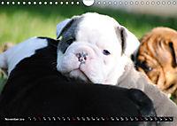 Bulldogs - Old English Bulldog Puppies (Wall Calendar 2019 DIN A4 Landscape) - Produktdetailbild 11