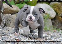 Bulldogs - Old English Bulldog Puppies (Wall Calendar 2019 DIN A3 Landscape) - Produktdetailbild 5