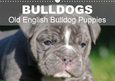 Bulldogs - Old English Bulldog Puppies (Wall Calendar 2019 DIN A3 Landscape), Elisabeth Stanzer