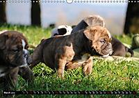 Bulldogs - Old English Bulldog Puppies (Wall Calendar 2019 DIN A3 Landscape) - Produktdetailbild 3
