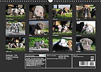 Bulldogs - Old English Bulldog Puppies (Wall Calendar 2019 DIN A3 Landscape) - Produktdetailbild 13