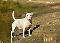 Bullterrier 2019 Frech und fröhlich durch das Jahr (Wandkalender 2019 DIN A2 quer) - Produktdetailbild 2