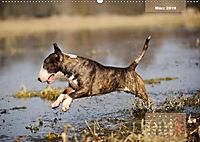 Bullterrier 2019 Frech und fröhlich durch das Jahr (Wandkalender 2019 DIN A2 quer) - Produktdetailbild 3
