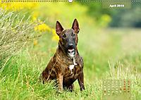 Bullterrier 2019 Frech und fröhlich durch das Jahr (Wandkalender 2019 DIN A2 quer) - Produktdetailbild 4