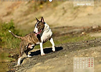 Bullterrier 2019 Frech und fröhlich durch das Jahr (Wandkalender 2019 DIN A2 quer) - Produktdetailbild 10