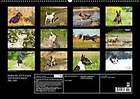 Bullterrier 2019 Frech und fröhlich durch das Jahr (Wandkalender 2019 DIN A2 quer) - Produktdetailbild 13
