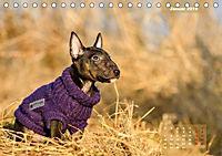 Bullterrier 2019 Frech und fröhlich durch das Jahr (Tischkalender 2019 DIN A5 quer) - Produktdetailbild 1