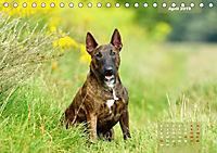 Bullterrier 2019 Frech und fröhlich durch das Jahr (Tischkalender 2019 DIN A5 quer) - Produktdetailbild 4