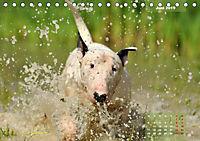 Bullterrier 2019 Frech und fröhlich durch das Jahr (Tischkalender 2019 DIN A5 quer) - Produktdetailbild 6