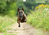 Bullterrier 2019 Frech und fröhlich durch das Jahr (Wandkalender 2019 DIN A4 quer) - Produktdetailbild 9