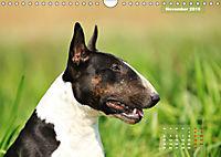 Bullterrier 2019 Frech und fröhlich durch das Jahr (Wandkalender 2019 DIN A4 quer) - Produktdetailbild 11
