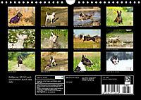 Bullterrier 2019 Frech und fröhlich durch das Jahr (Wandkalender 2019 DIN A4 quer) - Produktdetailbild 13