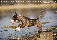 Bullterrier 2019 Frech und fröhlich durch das Jahr (Tischkalender 2019 DIN A5 quer) - Produktdetailbild 3