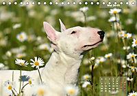 Bullterrier 2019 Frech und fröhlich durch das Jahr (Tischkalender 2019 DIN A5 quer) - Produktdetailbild 5