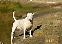 Bullterrier 2019 Frech und fröhlich durch das Jahr (Wandkalender 2019 DIN A3 quer) - Produktdetailbild 2