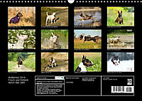 Bullterrier 2019 Frech und fröhlich durch das Jahr (Wandkalender 2019 DIN A3 quer) - Produktdetailbild 13