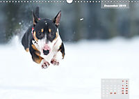Bullterrier 2019 Frech und fröhlich durch das Jahr (Wandkalender 2019 DIN A3 quer) - Produktdetailbild 12
