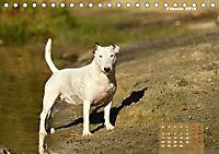 Bullterrier 2019 Frech und fröhlich durch das Jahr (Tischkalender 2019 DIN A5 quer) - Produktdetailbild 2
