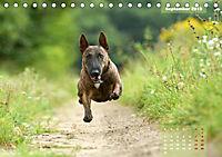 Bullterrier 2019 Frech und fröhlich durch das Jahr (Tischkalender 2019 DIN A5 quer) - Produktdetailbild 9