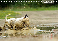 Bullterrier 2019 Frech und fröhlich durch das Jahr (Tischkalender 2019 DIN A5 quer) - Produktdetailbild 8