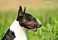 Bullterrier 2019 Frech und fröhlich durch das Jahr (Tischkalender 2019 DIN A5 quer) - Produktdetailbild 11
