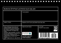 Bullterrier 2019 Frech und fröhlich durch das Jahr (Tischkalender 2019 DIN A5 quer) - Produktdetailbild 13