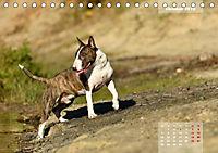 Bullterrier 2019 Frech und fröhlich durch das Jahr (Tischkalender 2019 DIN A5 quer) - Produktdetailbild 10