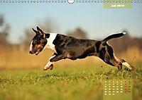 Bullterrier 2019 Frech und fröhlich durch das Jahr (Wandkalender 2019 DIN A3 quer) - Produktdetailbild 7