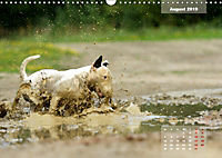 Bullterrier 2019 Frech und fröhlich durch das Jahr (Wandkalender 2019 DIN A3 quer) - Produktdetailbild 8