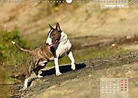 Bullterrier 2019 Frech und fröhlich durch das Jahr (Wandkalender 2019 DIN A3 quer) - Produktdetailbild 10