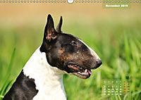 Bullterrier 2019 Frech und fröhlich durch das Jahr (Wandkalender 2019 DIN A3 quer) - Produktdetailbild 11