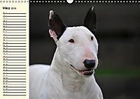 Bullterrier (Wandkalender 2019 DIN A3 quer) - Produktdetailbild 3