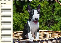 Bullterrier (Wandkalender 2019 DIN A3 quer) - Produktdetailbild 5