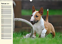 Bullterrier (Wandkalender 2019 DIN A3 quer) - Produktdetailbild 2