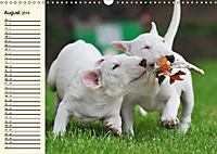 Bullterrier (Wandkalender 2019 DIN A3 quer) - Produktdetailbild 8