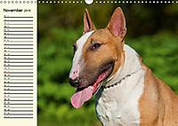 Bullterrier (Wandkalender 2019 DIN A3 quer) - Produktdetailbild 11