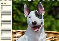 Bullterrier (Wandkalender 2019 DIN A3 quer) - Produktdetailbild 7