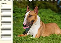 Bullterrier (Wandkalender 2019 DIN A3 quer) - Produktdetailbild 6