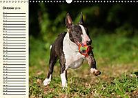 Bullterrier (Wandkalender 2019 DIN A3 quer) - Produktdetailbild 10