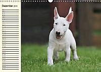 Bullterrier (Wandkalender 2019 DIN A3 quer) - Produktdetailbild 12