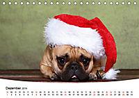 Bullys - Französische Bulldoggen 2019 (Tischkalender 2019 DIN A5 quer) - Produktdetailbild 12